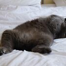 Maisie asleep on the bed by Tony Blakie