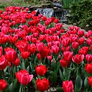 Red Tulips at Cheekwood by April White