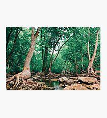 Finding Terabithia Photographic Print