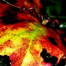 Tropical Leaf by shakey123