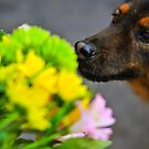 Stop and Smell the Flowers II by Mandy Wiltse