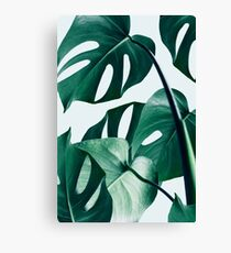 Lienzo Monstera #redbubble #artprints