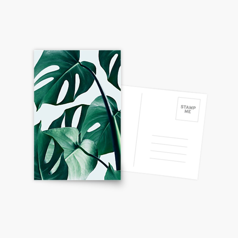 Monstera #redbubble #artprints Postcard