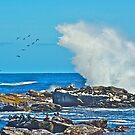Bird Catcher Wave by CrismanArt