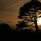 March Sunset at Newbridge  by Martina Fagan
