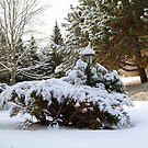 SNOW, snow, and more snow~ WANT SOME!!!!! by Larry Llewellyn