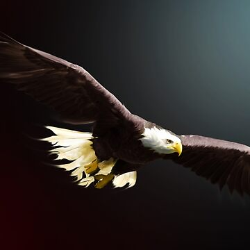 Bald Eagle by Cliff