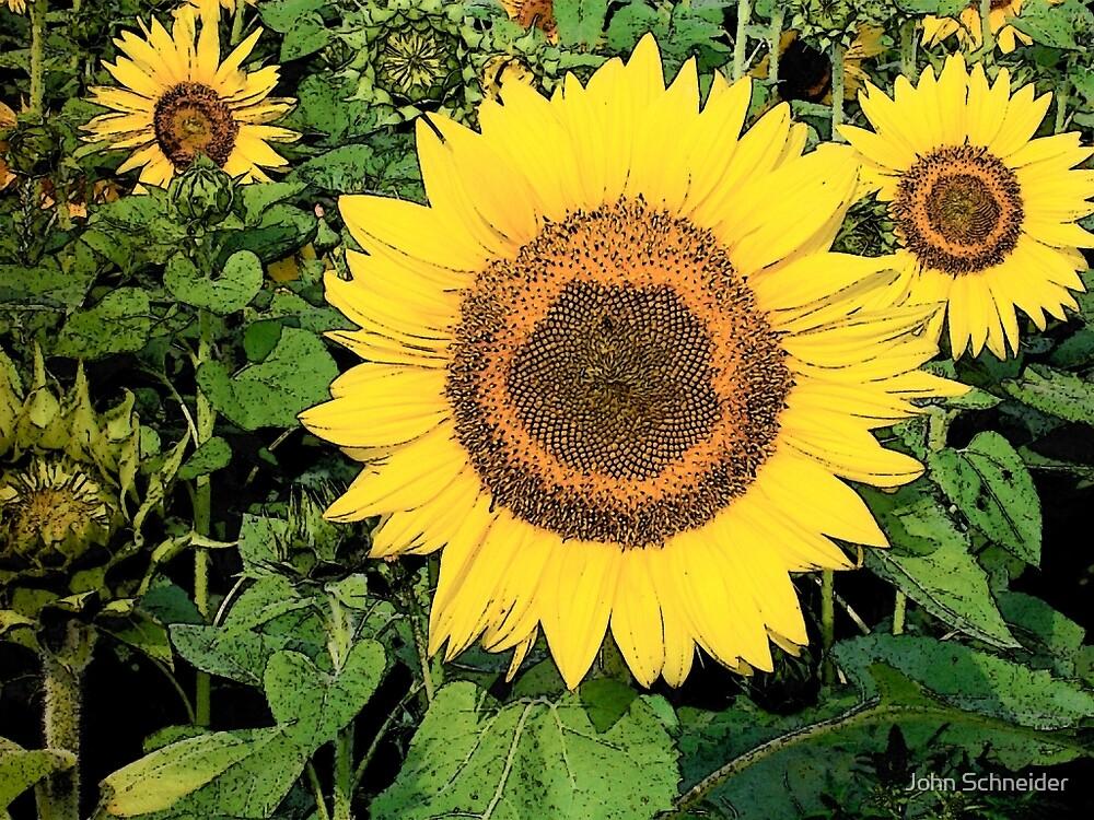 SunFlower by John Schneider