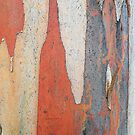Coloured Bark by Bryan Cossart