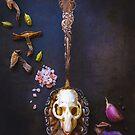 Roadkill Bone Broth with Foraged Mushrooms and Cardamom by alan shapiro