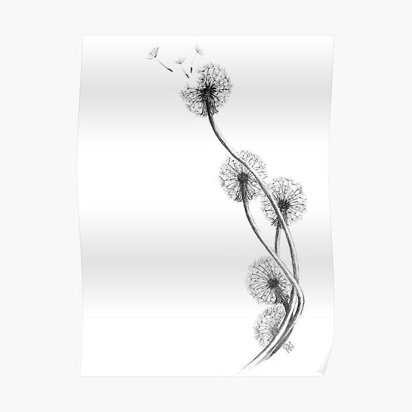 detailed drawing of dandelion clocks Poster