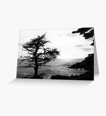 Cypress Tree Greeting Card