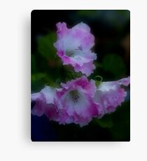 Pink and White Frills Canvas Print
