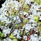 Wheel Bug on Crepe Myrtle Blooms by Glenna Walker
