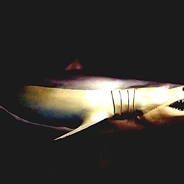 JAWS © by jansnow