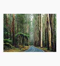 Black Spur, Yarra Ranges, Victoria. Photographic Print