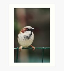 Bird on the Wire Art Print