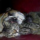 Lazy Buddies by Linda Miller Gesualdo