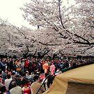 Ueno Park hanami, March 2013 : Photo Friday at meauxtaku.com by merimeaux