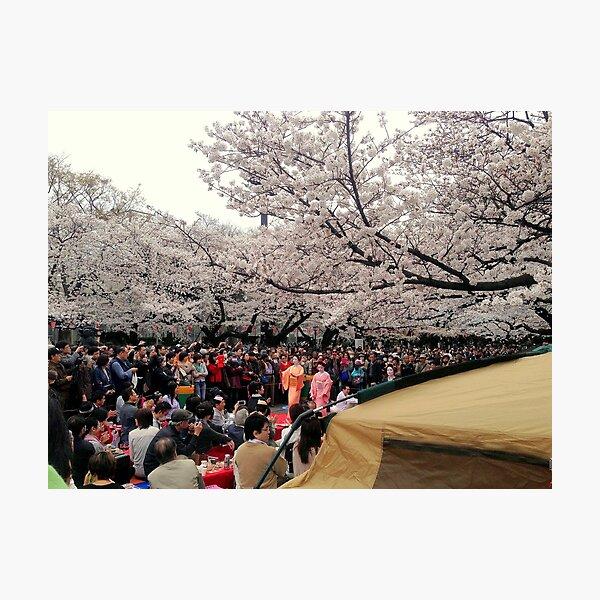 Ueno Park hanami, March 2013 : Photo Friday at meauxtaku.com Photographic Print
