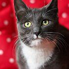 Polka dot kitten by GreyFeatherPhot