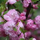 Miracle of Spring . © Dr.Andrzej Goszcz. by © Andrzej Goszcz,M.D. Ph.D