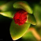 California Cactus by Kat Miller