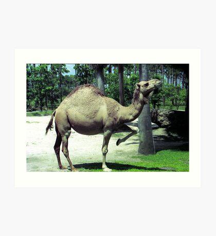 Camel Dance Art Print