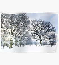 Snow covered forest with early morning sunrise Poster