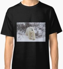 Polar Bear Coming out of the Arctic Willow Classic T-Shirt
