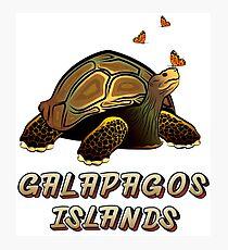 Schildkröte Galapagos und Schmetterlinge Fotodruck