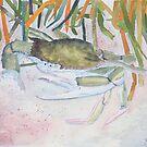 crab beach wildlife art by derekmccrea
