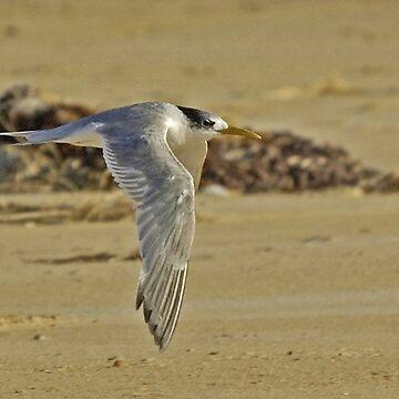 FLY BY TERN by UncaDeej