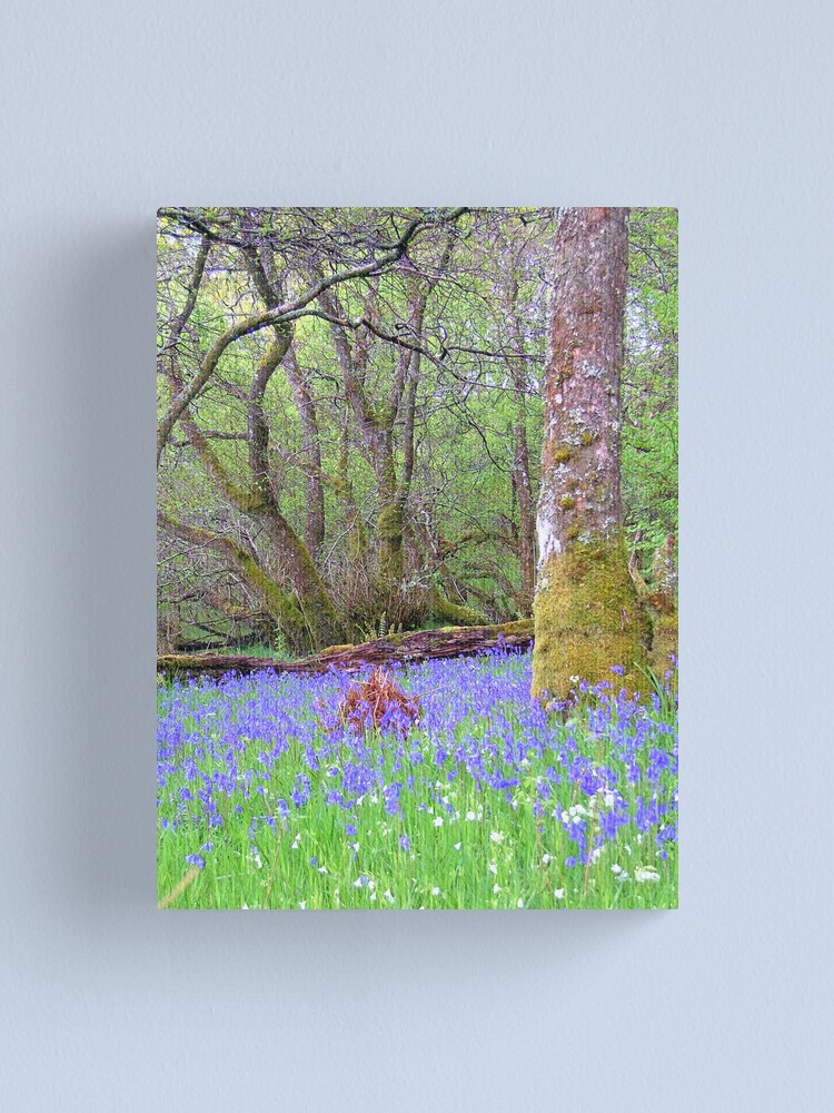 Alternate view of Bluebell Wood Canvas Print