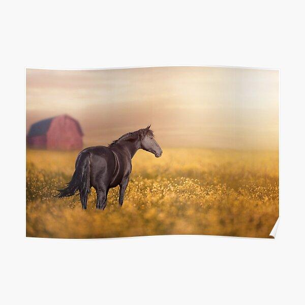 Dark Horse 11 Poster