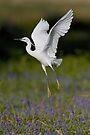 Little Egret by Neil Bygrave (NATURELENS)