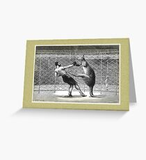 Boxing Kangaroo Greeting Card