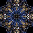 Midnight Blue by Julie Shortridge