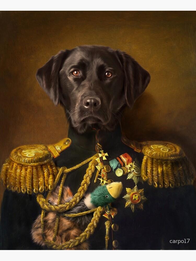 Labrador Portrait - Mambo by carpo17