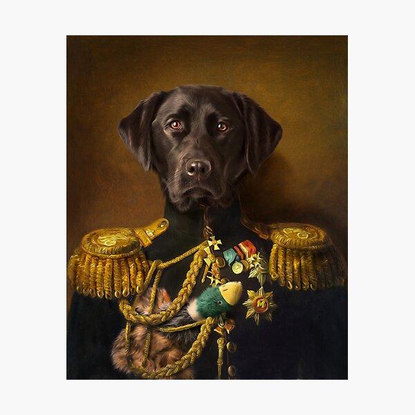 Labrador Portrait - Mambo Photographic Print