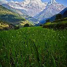 Meadow view to Annapurna South by Karen Scrimes