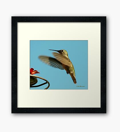 Little Golden One Framed Print