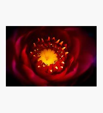A Water Lily Welcome Photographic Print
