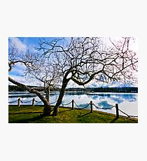 hallowed tree by the sea Photographic Print