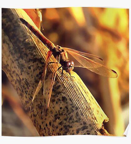 Elegant Red Darter Dragonfly Poster