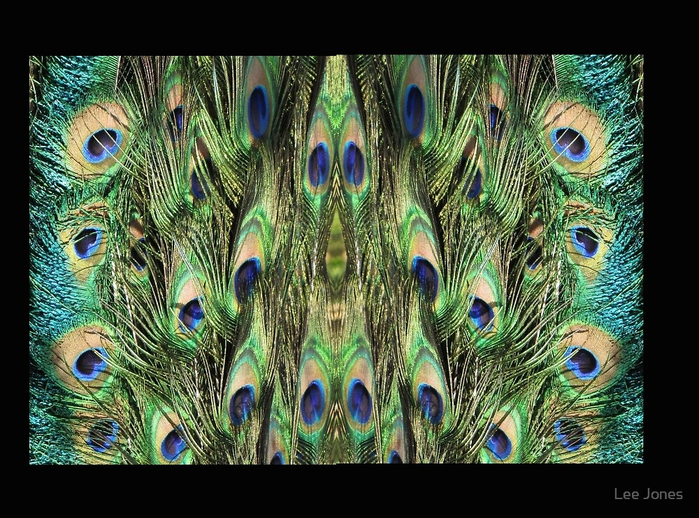 Peacock feather detail by Lee Jones