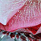 FROZEN (in sunshine) 7 by Cheri Sundra