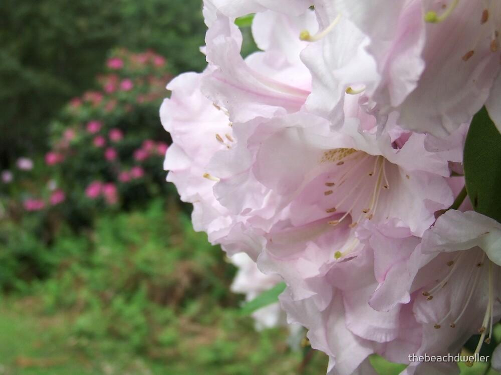 Bloom by thebeachdweller