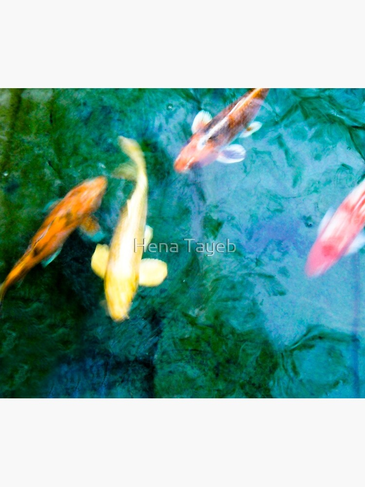 Turquoise Waters Yellow and Orange Koi Fish Zen Nature Photograph  by henzy