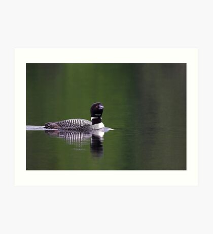 Lone Loon - Common Loon Art Print